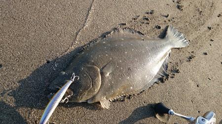 sasuke120裂波で釣ったヒラメと、この時期でも釣れてるマゴチ