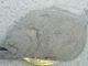 【サーフヒラメ】河口のサーフのセオリー通りの攻略 63cmヒラメ【ヒラメ攻略】