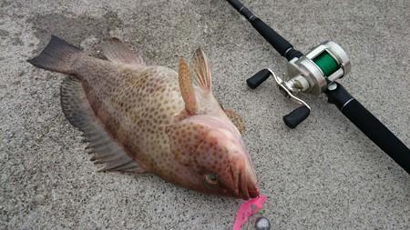ベイトタックルで根魚を釣る事を考える夜