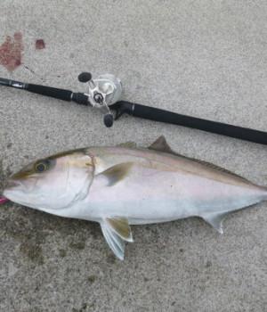 夏はショアジギ!堤防から美味なる青物ネイリ(カンパチ)を釣ってみませんか