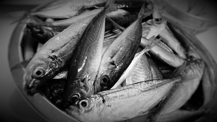 【逃げられた魚は大きい】雨中の親子ルアー釣り【寒い】