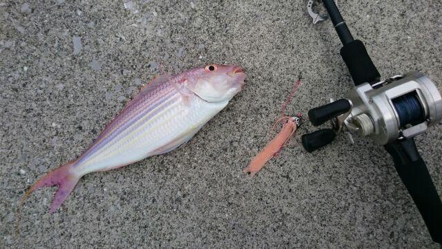 タングステン鯛玉初釣行でイトヨリゲット