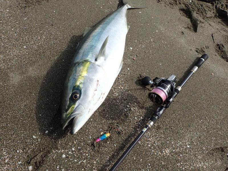 サーフブリ90cm!高知西部でもサーフブリが釣れるのだ